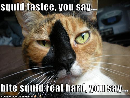 funny pictures cat bit a squid Free Nude Celebrities, Naked Celebrities, Celebrities Nudity